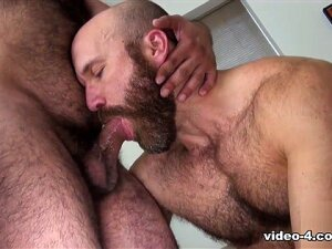 Nixon Steele And Marco Bolt - BearFilms. If You Like Your Men Big And Beefy, You're Going To Love Nixon Steele And Marco Bolt! They're Not Just Big And Beefy. They're Hairy And Brawny, Too! The Bearded Muscle Bears Make Out Then Strip Down To Their Shorts, Showing Off Some Big Guns And Flexing For Those Of You Who Enjoy Muscle Worship . And Wait Until You See Them Strip Down To Their Sexy Jockstraps! You Might Want To Pause A Moment And Imagine What They Might Smell Like. But Nixon Is Hungry So He Drops To His Knees, Undoes Marco's Strap, And Whips Out The Daddy's Huge Cock. He Starts Sucking, Making It Known He Wants The Juicy Piece Of Meat Up His Ass But Marco Knows His Dick. It's Not Just Big. It's Thick. So He Persuades Nixon To Go Down On Him And The Cocksucker Manages To Deep Throat The Entire Length, Even Getting His Face Fucked Nice And Slow In The Process. After Returning The Favor, Marco Gives Nixon Exactly What He Wanted And Asked For. Cock. All The Way To The Balls. It Does Deep And Nixon Gets Pounded Hard, Pumped Full Of Raw Cock As He's Bareback Fucked Like The Greedy Whore That He Is. When They Pull The Bed Out, Things Get A Bit More Serious, With Nixon On His Back, Legs Up In The Air, Marco Riding The Hairy Bottom With As Much Passion As You Might Expect From A Romantic Couple! Porn