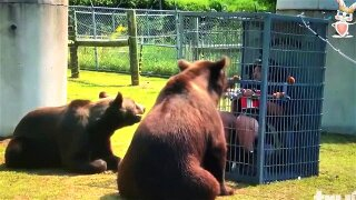 XTREME CAGED PUBLIC HUMILIATION ITALIAN BRUTALIZED BY 2 BEARS 3 DADDIES